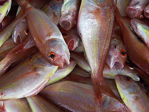鱼肉。(falco/CC/Pixabay)
