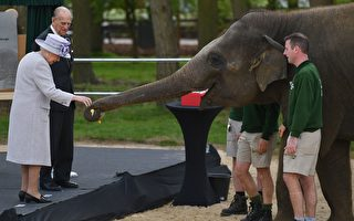 倫敦動物園還有新玩法!ZSL London Zoo