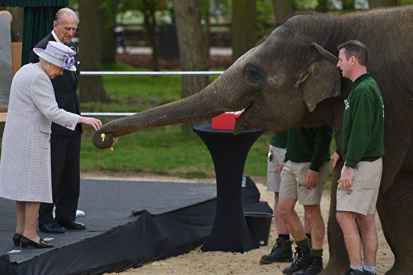 在倫敦動物園,喂大象香蕉吃的女王陛下夫婦 (BEN STANSALLAFP Getty Images)