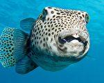 污水中的化学物质,已经导致河流中大量雄鱼出现向雌鱼变性的情况。(Pixabay)