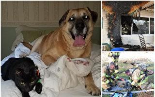 火災過後,狗克洛伊(Chloe)在兩個月後找回失踪的貓林格(Ringer)。(大紀元合成圖)