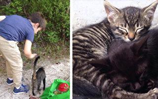一對父子幫助了一隻母貓,結果半夜母貓帶著自己的三隻小貓又來拜訪。(iburnmyfeelsaway/Imgur/大紀元合成)