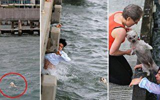 年輕男子下海營救溺水小狗。(NTDTV合成圖)
