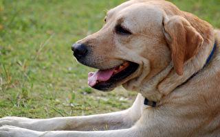台檢疫新規 不含牛成分犬貓食品可攜帶入境