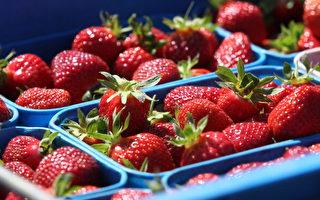 新西蘭草莓(Sandra Mu/Getty Images)