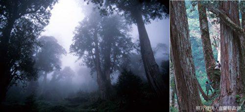 """栖兰神木园,又称""""马告神木园""""。马告(Makauy),泰雅族语是指""""山胡椒""""的意思。 (宜兰县政府提供)"""