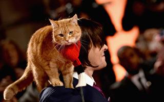 《遇見街貓BOB》故事中的真實人物現身,圖為詹姆士‧伯恩與BOB貓咪。(Jeff Spicer/Getty Images)