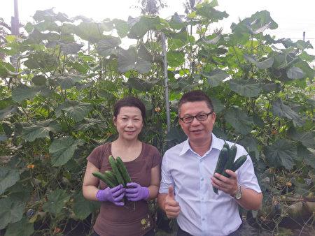 台双硕士才女改务农 花盆种小黄瓜产量增2倍