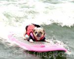8月5日,在帕西菲卡举办的世界狗狗冲浪锦标赛。(林骁然/大纪元)