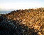 希腊首都雅典附近野火延烧近4日,16日终于控制住火势。图为鸟瞰焚烧后的树林。 (SAVVAS KARMANIOLAS/AFP/Getty Images)