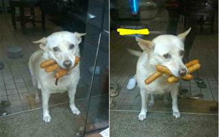 最可愛的熱狗「劫匪」 小胖狗夜闖便利店