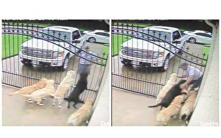 主人观看安全监控录像,惊奇发现邮递员非但不是狗狗们的天敌,而且是它们每天热烈期待的最好朋友!(视频截图/大纪元合成)