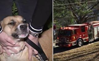 這隻曾被遺棄、差點被社會遺忘、被了結生命的狗,或在不經意間救下了許多人的生命。主人蘇茜自豪表示:「她是我們的英雄。」(視頻截圖/大紀元合成)
