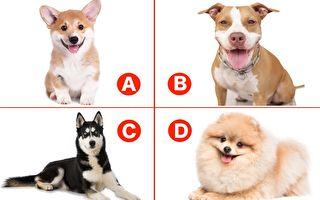 小测试:选你最喜欢的狗狗 看到你内心最深处