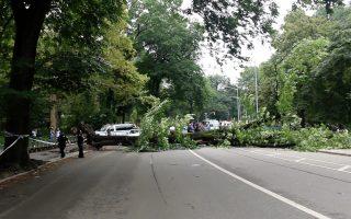 中央公園傳出意外,一棵大樹倒下後壓傷四人。 (蘭青/大紀元)