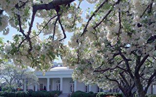 美國一名10歲男孩給總統川普寫了一封信,信中表述自己願意為總統提供免費除草服務。川普隨即邀請這名男孩前往白宮參觀,並在玫瑰園除草。圖為玫瑰園。(維基百科)