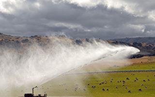 恆天然在北島西海岸的牧場。(Minehan/ullstein bild via Getty Images)