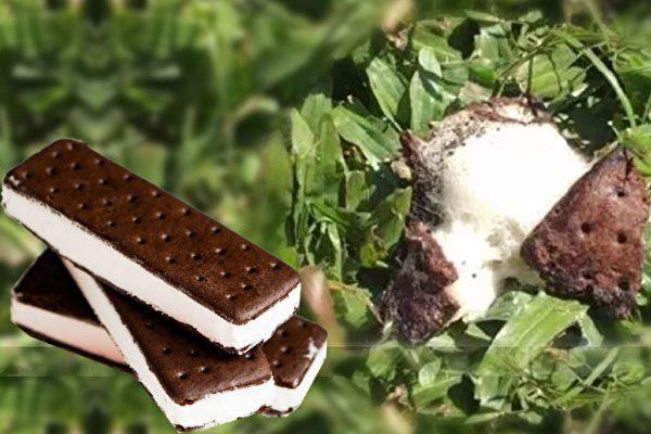 澳洲Coles超市的這款冰淇淋在太陽下暴曬4天也不融化,引發消費者擔憂。(Facebook, instagram/大紀元合成)