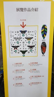 在市府大廳可認識多種蝴蝶造型風箏 。(林寶雲/大紀元)