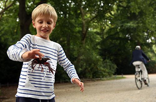 8月24日,柏林动物园区出现北美小龙虾。一个5岁法国男孩看到后,把一只龙虾抓了起来。 (Adam Berry/Getty Images)