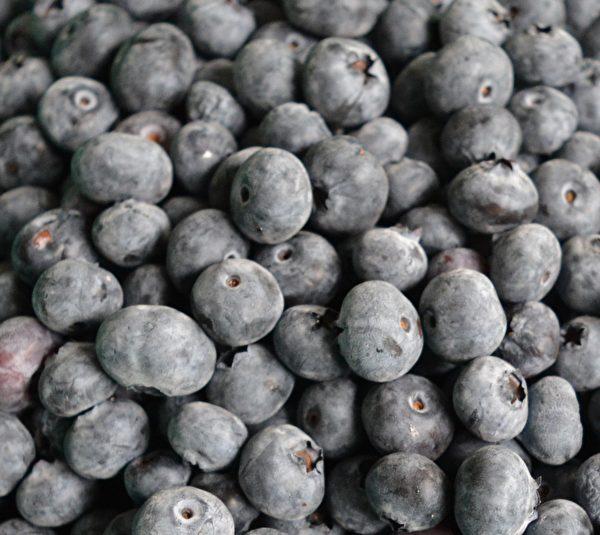 图:刘恩海生产的有机蓝莓健康有味。 (网络图片)