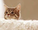 猫咪总是比较好奇,但是这可能会给自己惹麻烦啊。(Depositphotos)