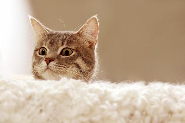 貓咪總是比較好奇,但是這可能會給自己惹麻煩啊。(Depositphotos)
