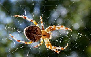 不可不防!认识加拿大毒蜘蛛