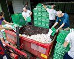 上千万的受污染鸡蛋从荷兰流入德国。    (PATRICK HUISMAN/AFP/Getty Images)