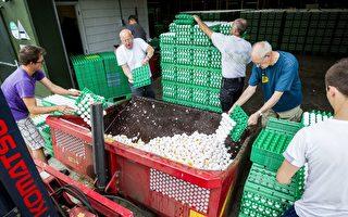 欧洲17个国家发现受污染鸡蛋 波及亚洲