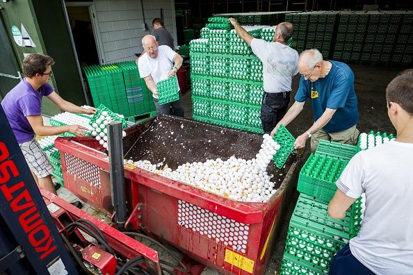 8月3日,荷蘭一間農場正在銷毀受殺蟲劑普芬尼污染的雞蛋(PATRICK HUISMAN/AFP/Getty Images)
