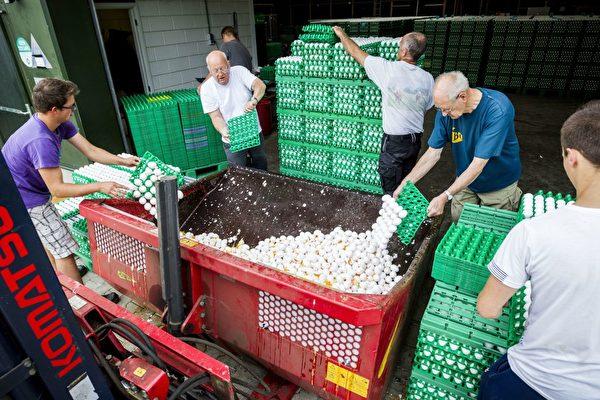 8月3日,荷兰工人在销毁可能受污染的鸡蛋。(PATRICK HUISMAN/AFP/Getty Images)