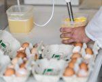 近段時間,「毒雞蛋」事件在德國鬧得沸沸揚揚,從荷蘭和比利時進口的上千萬顆雞蛋被查出有殺蟲劑。圖為一個實驗室檢查雞蛋的情況。(GUIDO KIRCHNER/AFP/Getty Images)