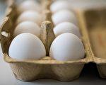 自從7月底以來,氟蟲腈的污染導致了歐洲多個國家數以百萬的雞蛋被銷毀。(MARCEL KUSCH/AFP/Getty Images)