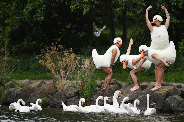 EDINBURGH, SCOTLAND - AUGUST 10: Dancers from 'Tutu', perform at St Margaret's Loch in their spoof Swan Lake costumes on August 10, 2017 in Edinburgh, Scotland. Their Edinburgh Festival Fringe show is an invitation to those who love dance to experience familiar favourites, in an opportunity to explore some of the most famous and significant works in the repertoire from Swan Lake to Pina Bausch in a fun way with with a twist. (Photo by Jeff J Mitchell/Getty Images)