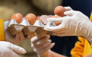 """德国""""坏蛋""""手机App告诉你哪些是受污染鸡蛋"""