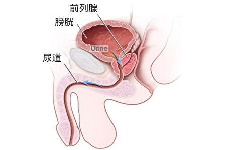 前列腺結構。(NCI/大紀元製圖)