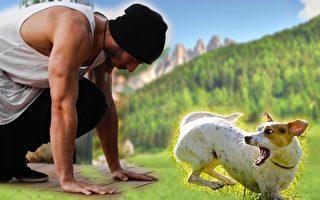 遇到凶狗撲過來,一個下蹲會嚇住牠。(Pixabay/大紀元合成)
