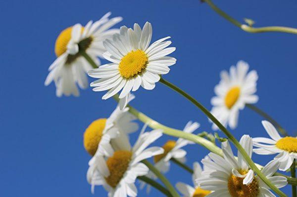 拥抱自然,放松心情,平常心迎接每天的太阳,开心过日子。(Pixabay)
