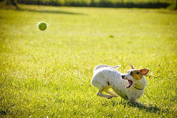 狗有奴性,胆子并不像人们想像的无所畏惧。利用狗狗的性格,可以在面对狗狗的进攻时获得安全。(Pixabay)