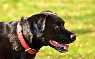 墨尔本市区去年发生了10起严重的恶犬攻击事件,导致5人受重伤,4只狗丧命,1只狗受重伤。(Pixabay)