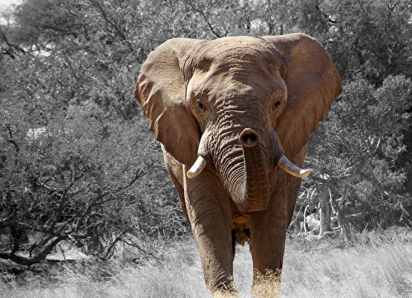 納米比亞的大象(pixabay)