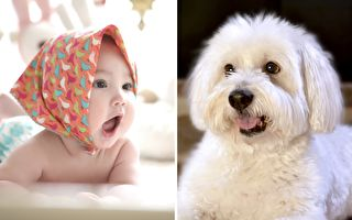 1岁宝宝跟汪星人形影不离 他们的友谊让你笑得合不拢嘴