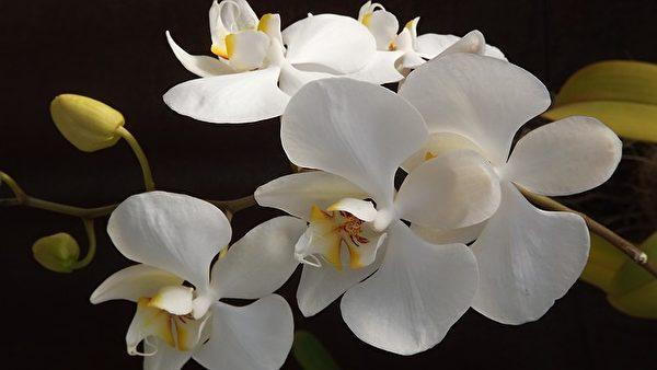 美丽的花朵。(Pixabay)