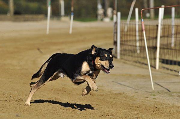 遇到狗狗扑过来,千万不要跑。(Pixabay)