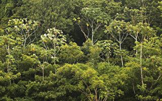 科学家发现 亚马逊雨林会自己造雨