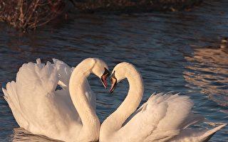爱情可遇不可求,或许生生世世积攒下的缘分是人能够相识、相知、相爱,并走向婚姻的根本原因。(Pixabay.com)