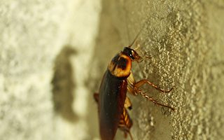 衛生監察員在Clayton區的Desi Vibez餐廳內,發現了發霉的人造黃油、蟑螂。(Pixabay)