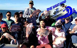 钓鱼是身在澳洲决不能错过的休闲项目。(St Kilda Charter提供)