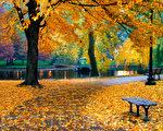 每一片秋叶都刻满我的书诗,寄托著对你无限的哀思。 (Fotolia)